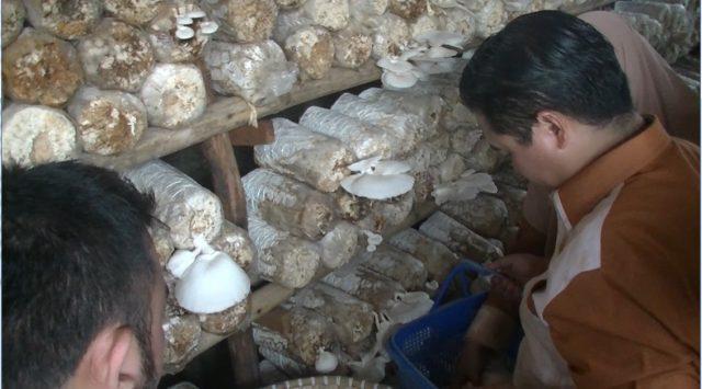 Walikota Banjarmasin Berharap Kampung Jamur Jadi Objek Wisata