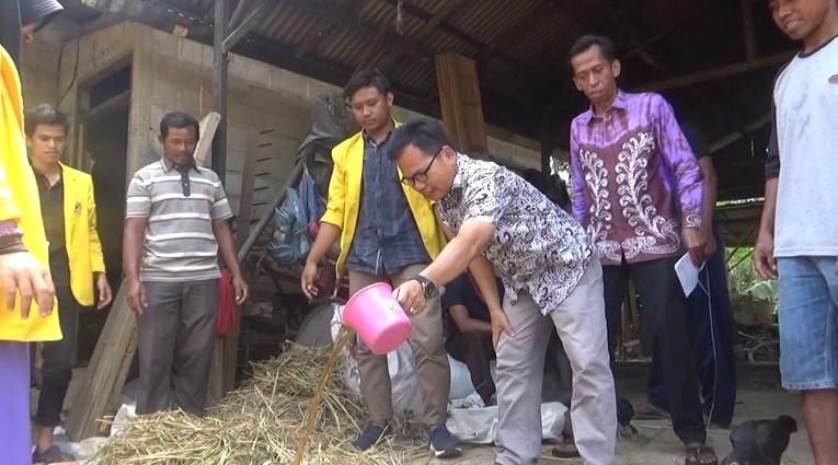 KKN Unlam Ajarkan Pengolahan Pakan Ternak Dari Fermentasi Jerami