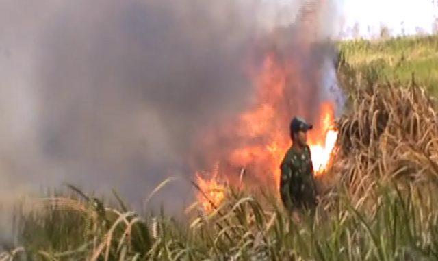 Meski Alami Luka Bakar, Muhdi Masih Ikut Padamkan Kebakaran Lahan