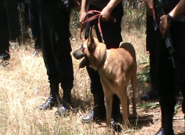Buru Pelaku Penembakan, Polisi Turunkan Dua Anjing Pelacak