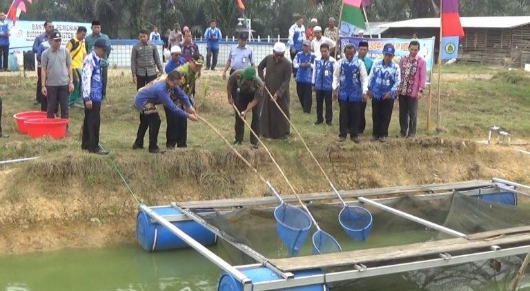 Bupati Hulu Sungai Selatan Panen Ikan di Ponpes Ibnu Athaillah Kapuh