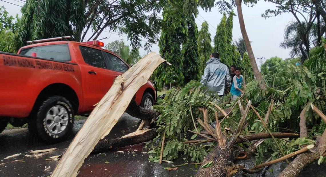 Pohon tumbang bpbd