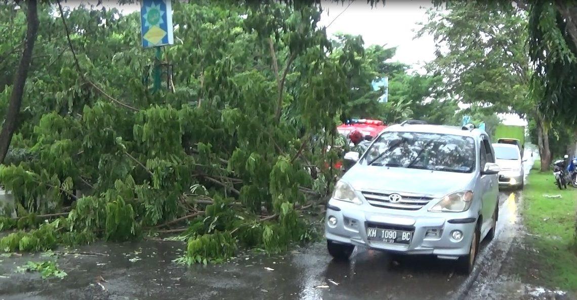 pohon tumbang di wilayah Hulu Sungai Selatan