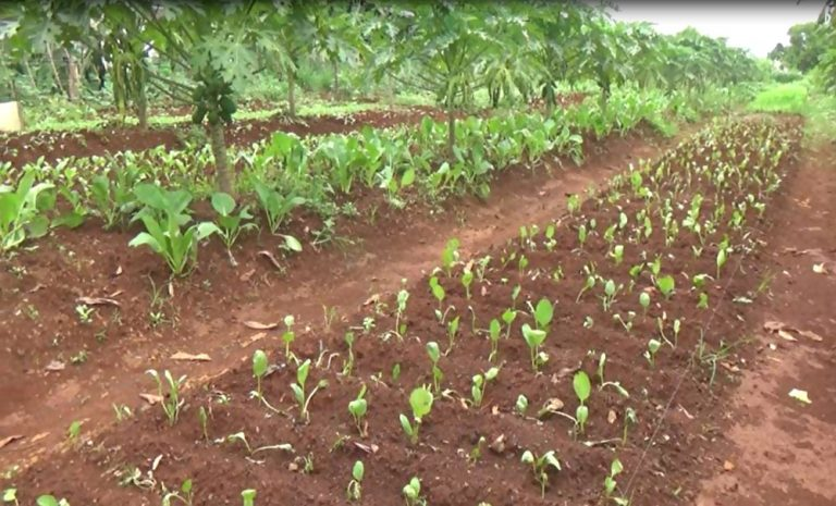 Warga Binaan Rutan Pelaihari Panen Sayur dan Buah