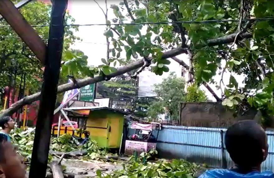 pohon tumbang di Tower Indor Futsal Banjarmasin
