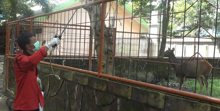 penyemprotan Disinfektan di Taman Satwa & Pendaratan Ikan