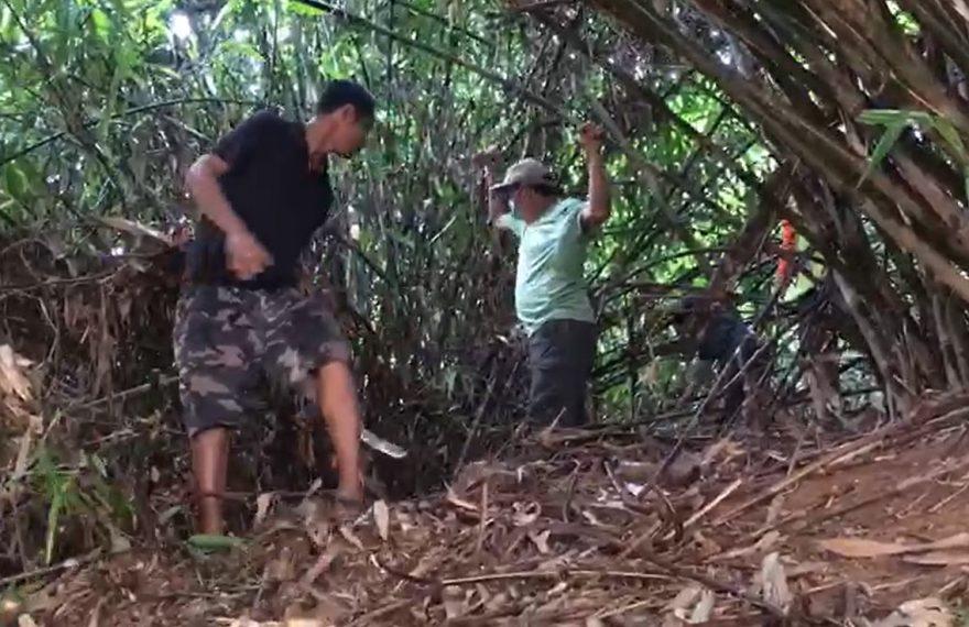 Paman Birin menebas pohon bambu kering