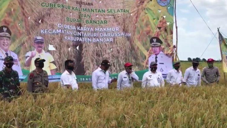 Paman Birin Panen 220 Hektar Sawah