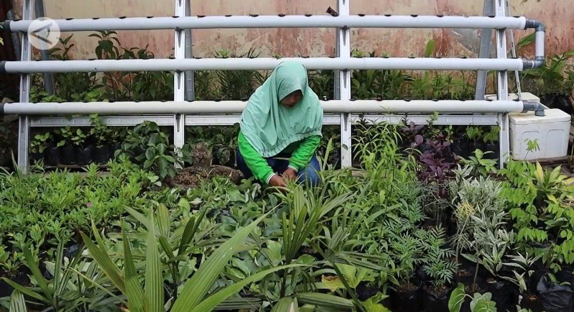 buidaya tanaman obat
