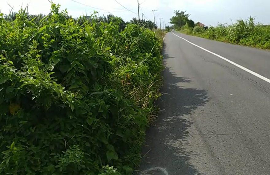 jalan provinsi penghubung Kandangan - Nagara ditumbuhi rerumputan
