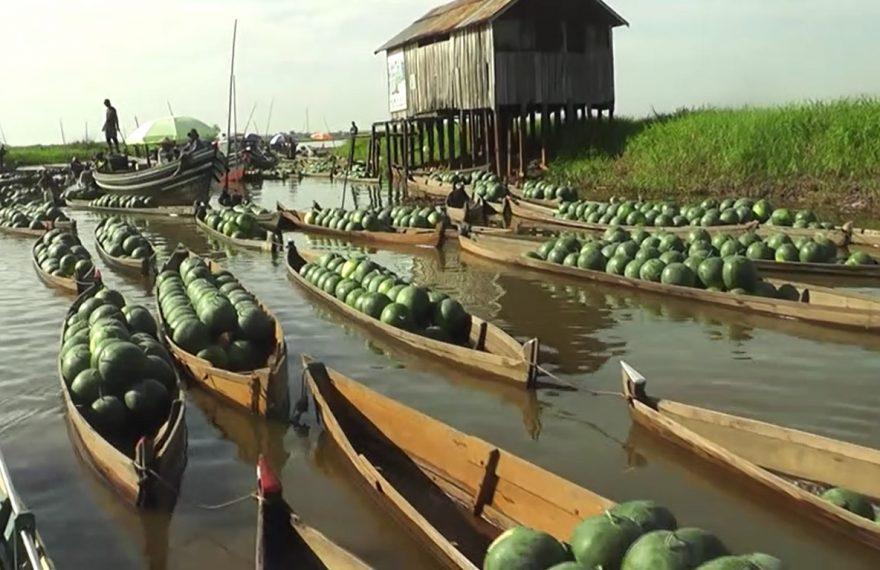 panen semangka