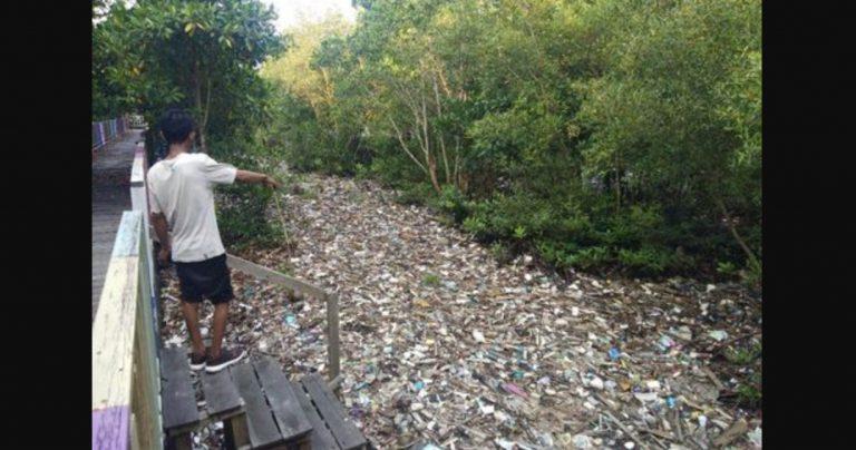 Sampah Taman Mangrove Pantai Bontang Timbulkan Bau Busuk