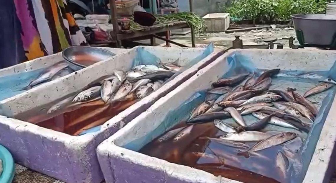 ikan peda di pasaran