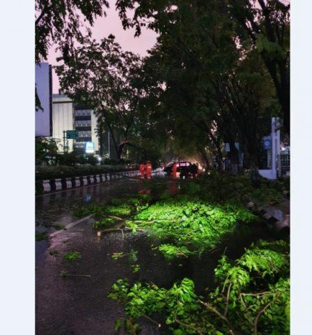 pohon besar tumbang seperti di depan kantor DPRD Kalsel
