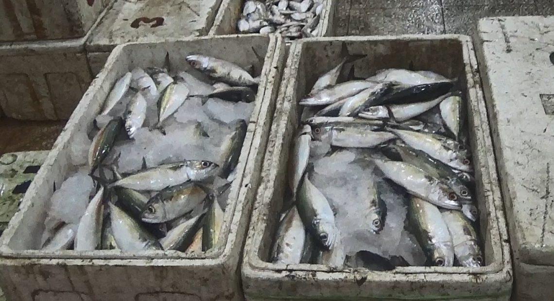 stok ikan di Banjar Raya
