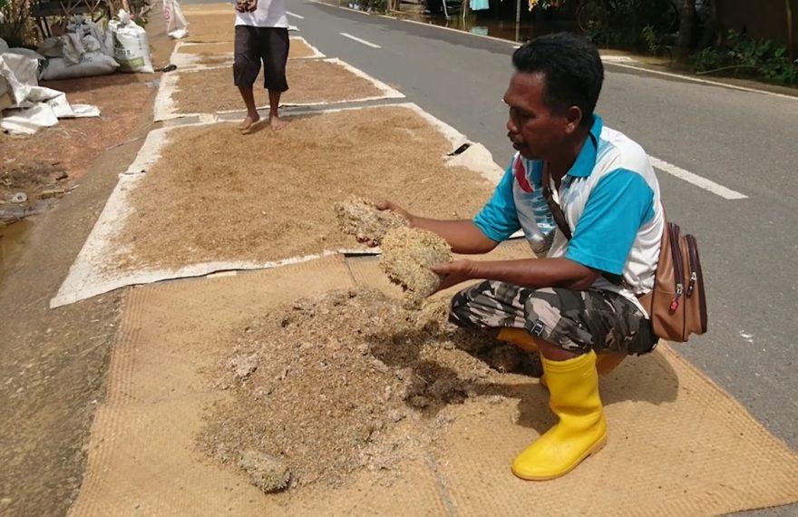 petani di Desa Bumi Harapan (foto:duta tv)