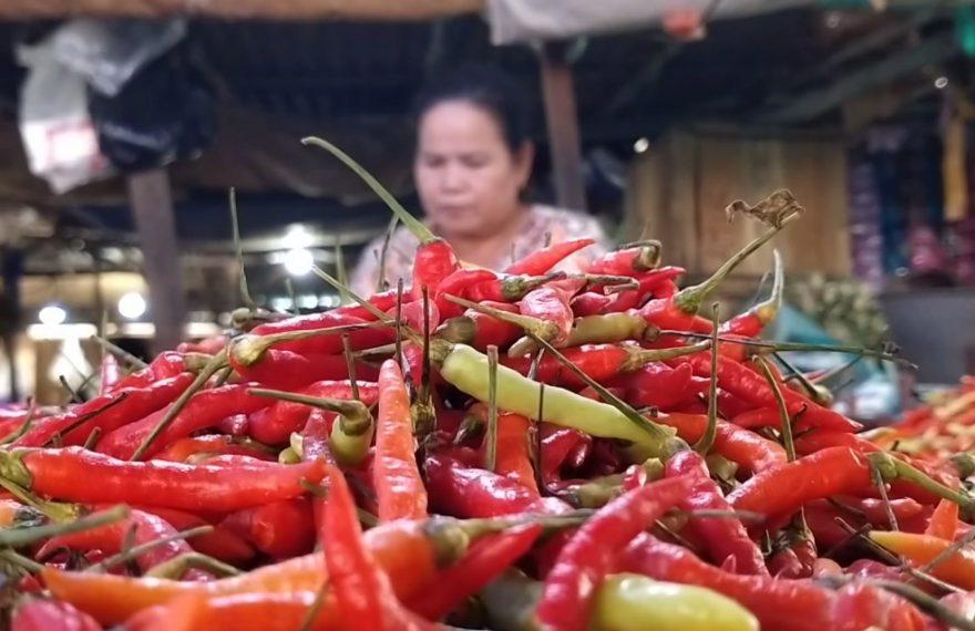 harga cabai Sulawesi naik (foto:duta tv)