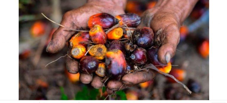 Sri Lanka Larang Impor Sawit dari Indonesia