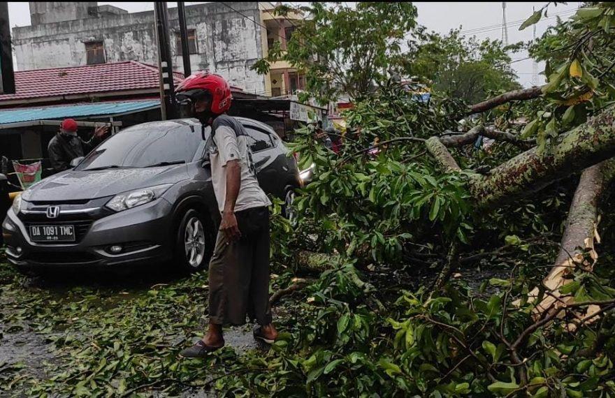 pohon besar tumbang di Jalan Pramuka, akibat angin kencang (foto:duta tv)